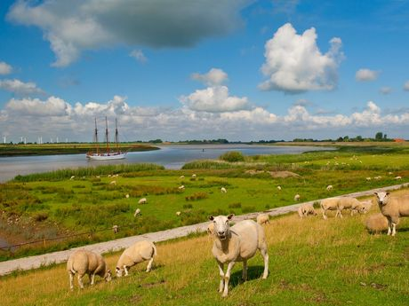 Schafe befinden sich ebenfalls auf dem Deich in Moormerland, südliches Ostfriesland.