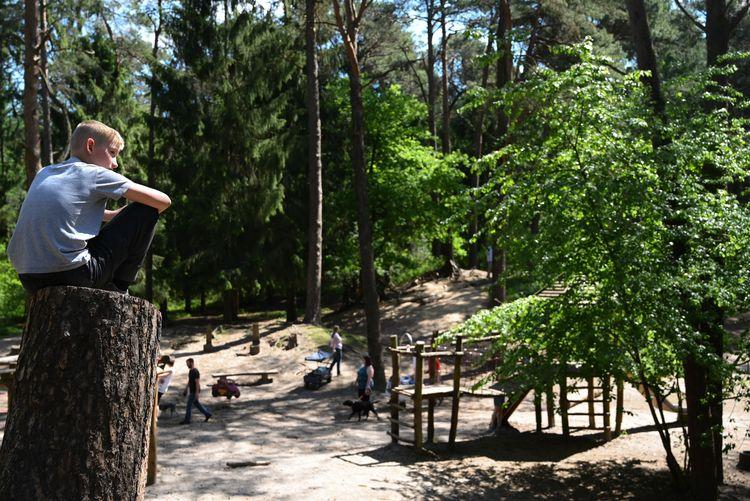 Der Heseler Wald ist das größte zusammenhängende Waldgebiet Ostfrieslands