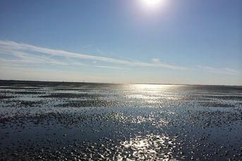 Familien-Wattwanderung im UNESCO-Weltnaturerbe Wattenmeer