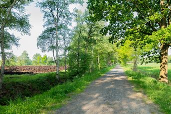 Moorweg