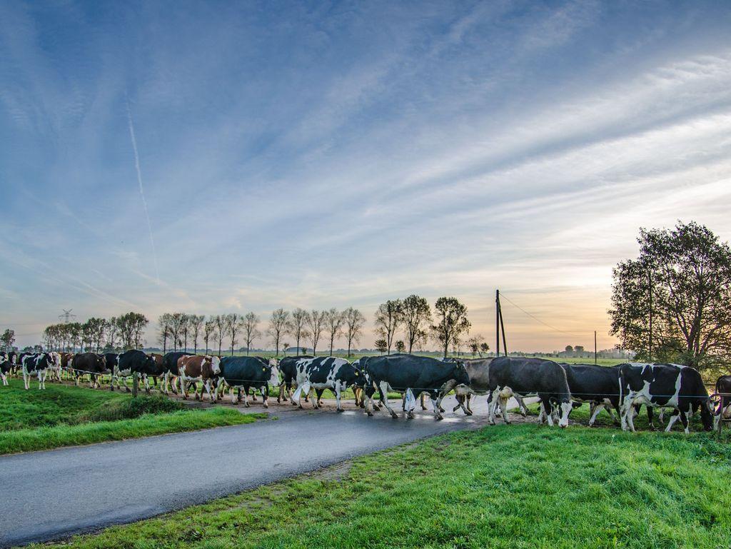Südliches Ostfriesland