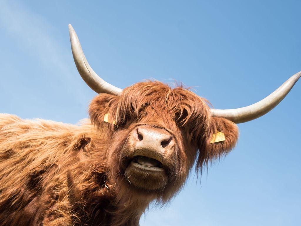 Tier in der Gemeinde Ditzum, Südliches Ostfriesland