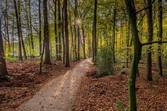 Wiefelsteder Kirchweg