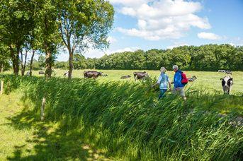 Ostfriesland Wanderweg - 4. Etappe - von Großefehn nach Aurich