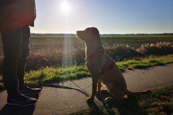 Mit Hund in Rhauderfehn