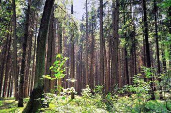 Nordic Walking Park Dammer Berge - Route 3 Räuberroute