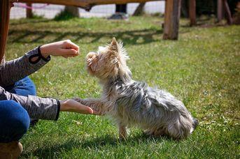 Hundetraining Hundefreunde Hage